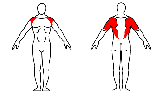 Muscle groups affected by kettlebell halo