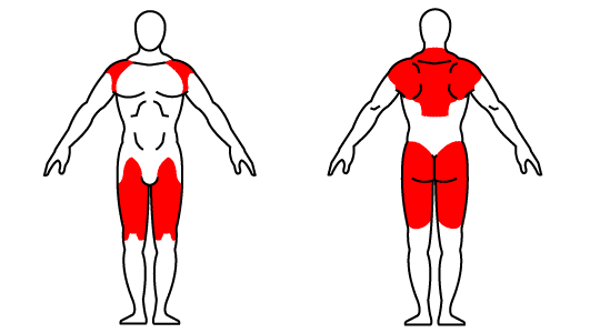 Muscle groups affected by the kettlebell High Pull