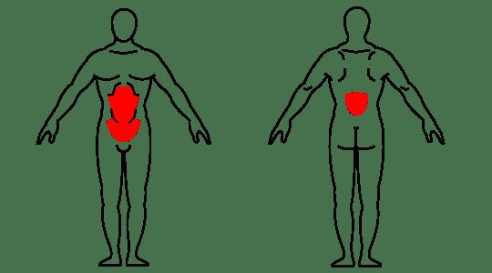 kettlebell Russian twist muscle groups