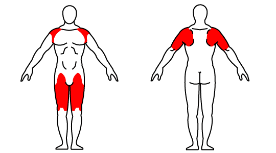 Muscle groups affected by Kettlebell Thruster