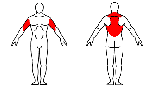 Muscle groups affected by the kettlebell one-arm row