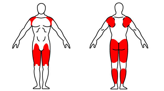 kettlebell pistol squat muscle groups