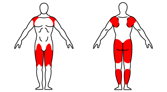 Kettlebell front squat muscle groups